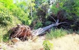 Propietarios forestales piden el uso de biomasa para calentar edificios públicos