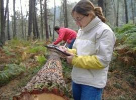 Investigadores de Barredo cuantifican la biomasa que producen los montes