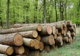 La biomasa sólida se consolida como la fuente de energía para calefacción más competitiva para el usuario final