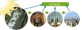 La Comunidad organiza un taller sobre uso de la biomasa para mejorar la competitividad de las empresas de la Región