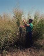 APPA Biomasa pide a Industria mejoras en el decreto de retribución para garantizar la continuidad del sector
