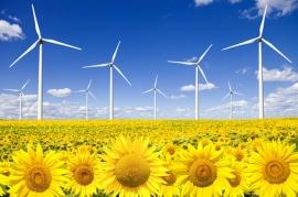 Eólica recurrirá hachazo a energías renovables