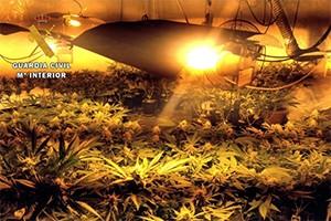 El aumento de invernaderos ilegales pone en alerta a la Guardia Civil y a las eléctricas
